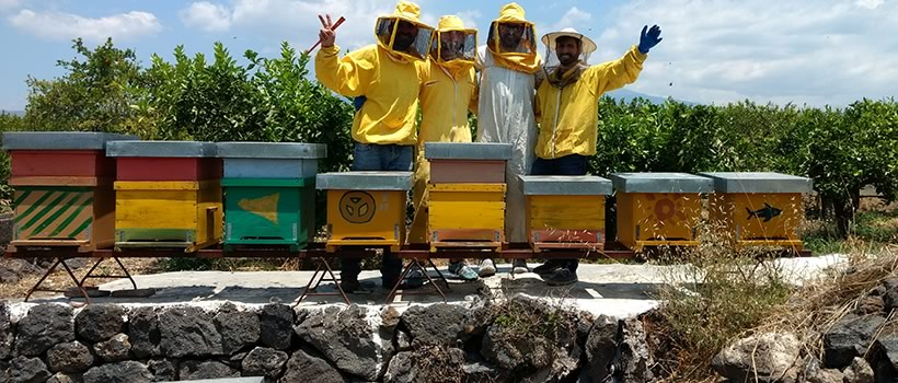 environmental studies and sustainability students in full protective gear raise arms in air in back of a row of bee hives.
