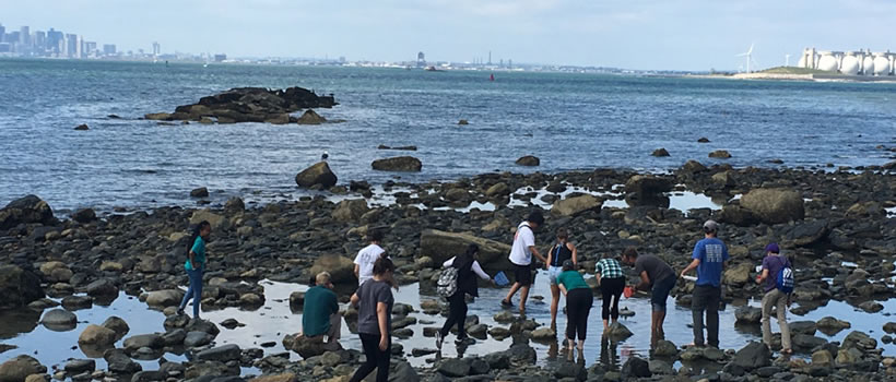 Environmental Science of students walk on the rocks at low tide near UMass Boston.